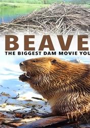 BEAVERS (IMPORT) (DVD)