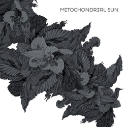 MITOCHONDRIAL SUN ..DRIAL SUN
