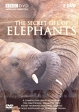 Secret life of elephants,...